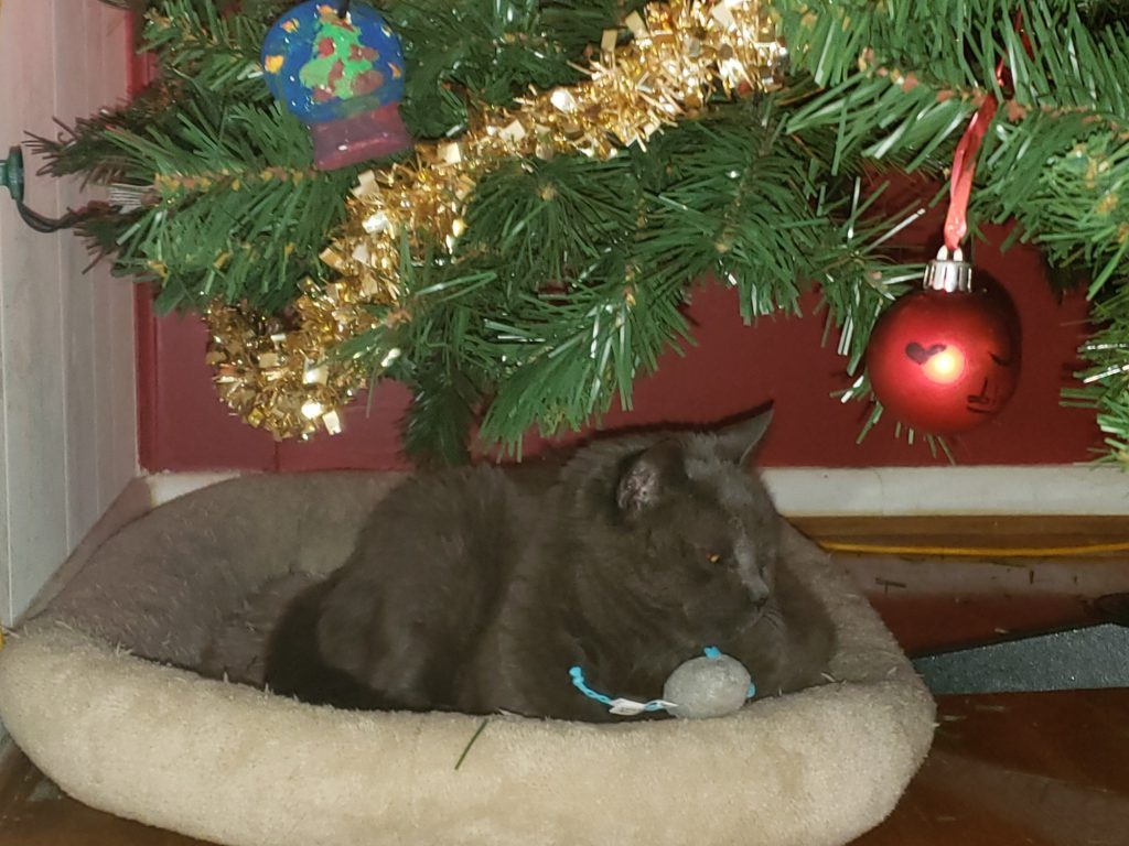 Smokie apparently ininterested in his mice, a few seconds bfore I caught him in the act.