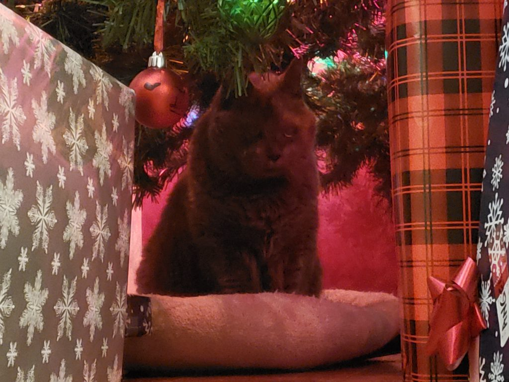Smokie in his medium sized dog bed under the Christmas tree. Comfy and quiet !